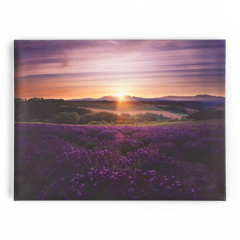 """Graham and Brown 40-886 23 Inch x 31 Inch """"Lavender Sunset"""""""