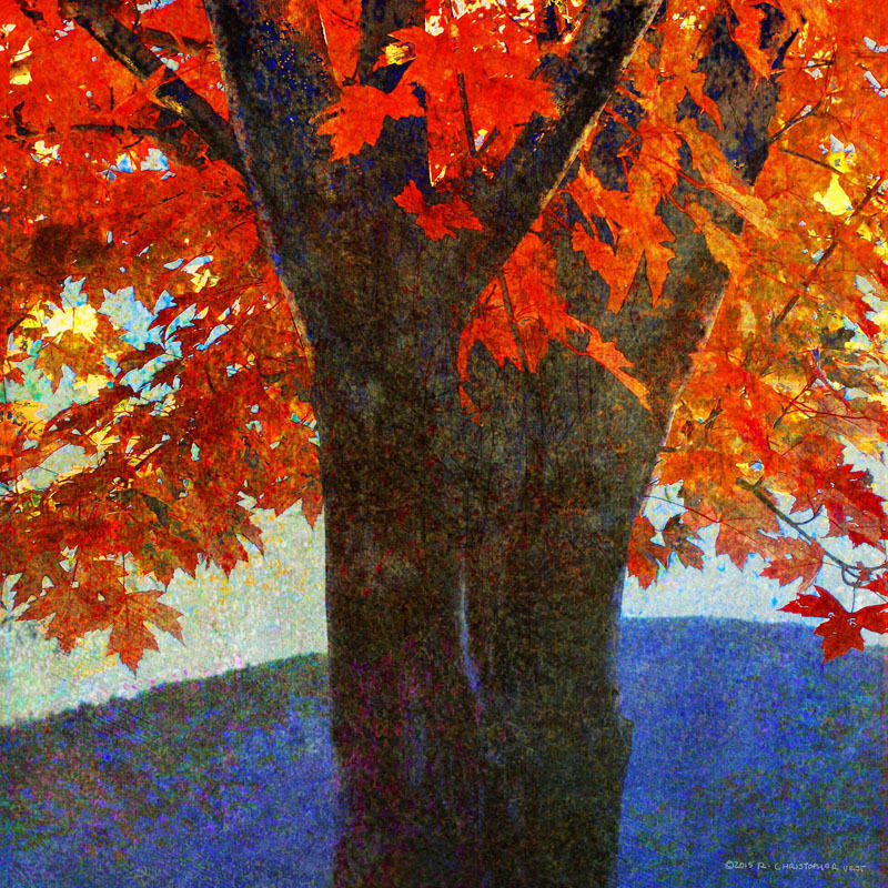 Marmont Hill Brilliant Fall Maple I Chris Vest Painting Print on
