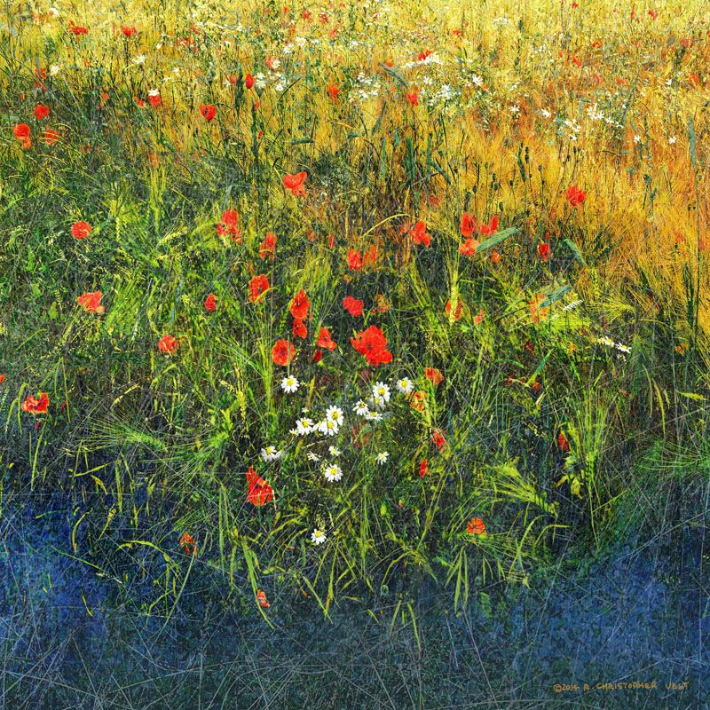 Marmont Hill Barley and Poppies B Chris Vest Painting Print on Canvas