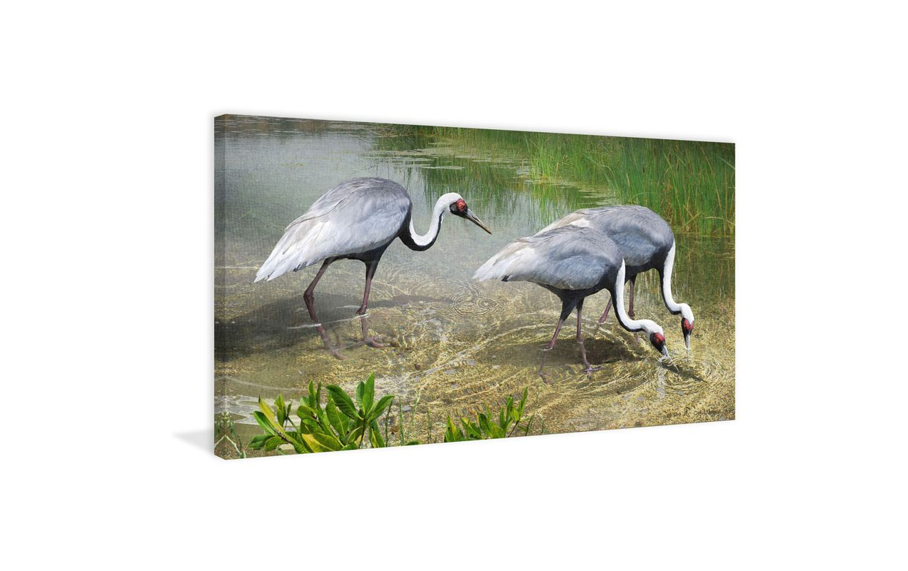 Marmont Hill White Naped Cranes Chris Vest Painting Print on Canvas 22