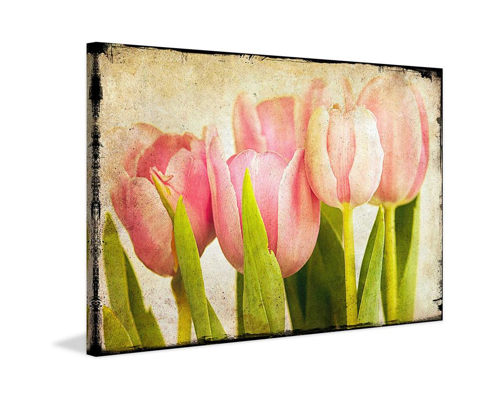 Marmont Hill Pink Tulips CU Malek Painting Print on Canvas 16 x 24