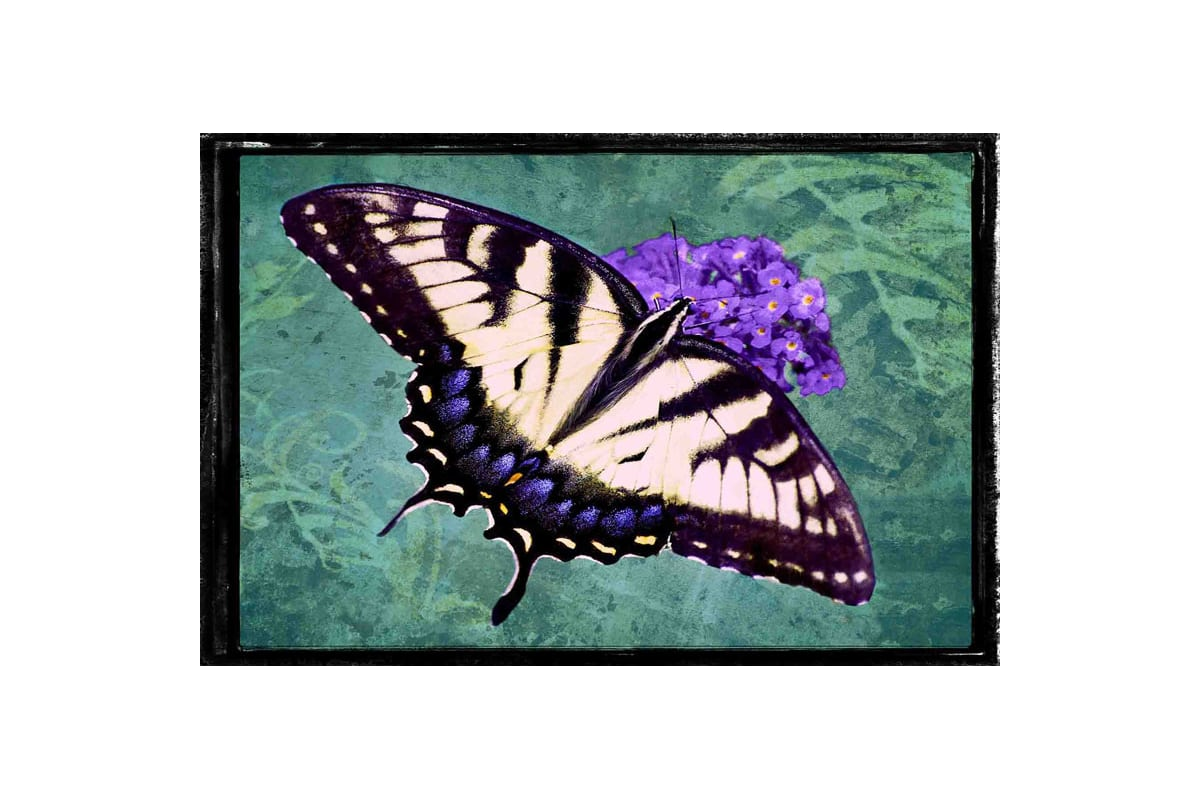 Marmont Hill Tiger Swallowtail Robertson Painting Print on Canvas 20 x Sale $147.31 ITEM: bci2816414 ID#:ET-MWW-LED-3010-C-30 UPC: 763250496145 :