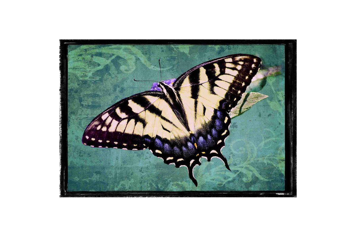 Marmont Hill Sparkling Tiger Swallowtail Painting Print on Canvas 30 x