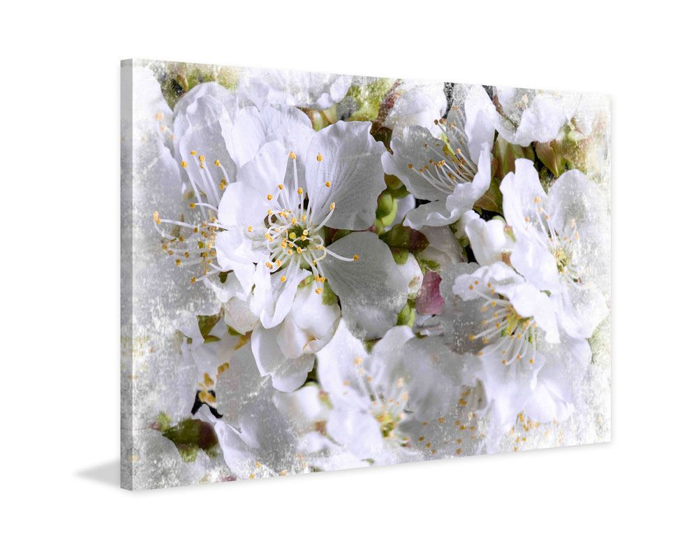 Marmont Hill Apricot Blossoms Aryai Painting Print on Canvas 40 x 60 Sale $325.77 ITEM: bci2812943 ID#:ET-MWW-SA-6015-C-60 UPC: 763250480007 :