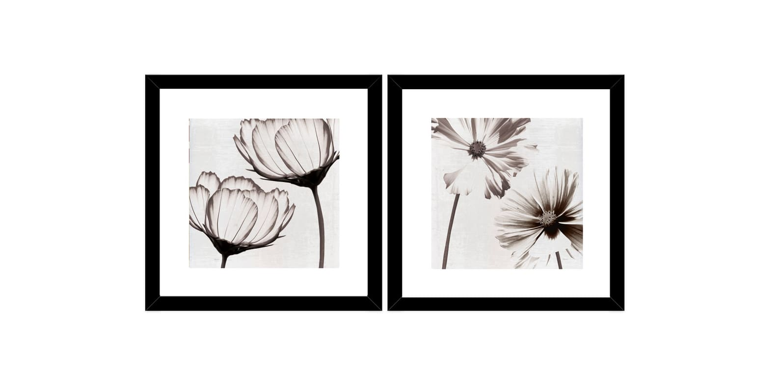 "PTM Images 1-32954 20 Inch x 20 Inch ""Black & White Primrose"" Two"
