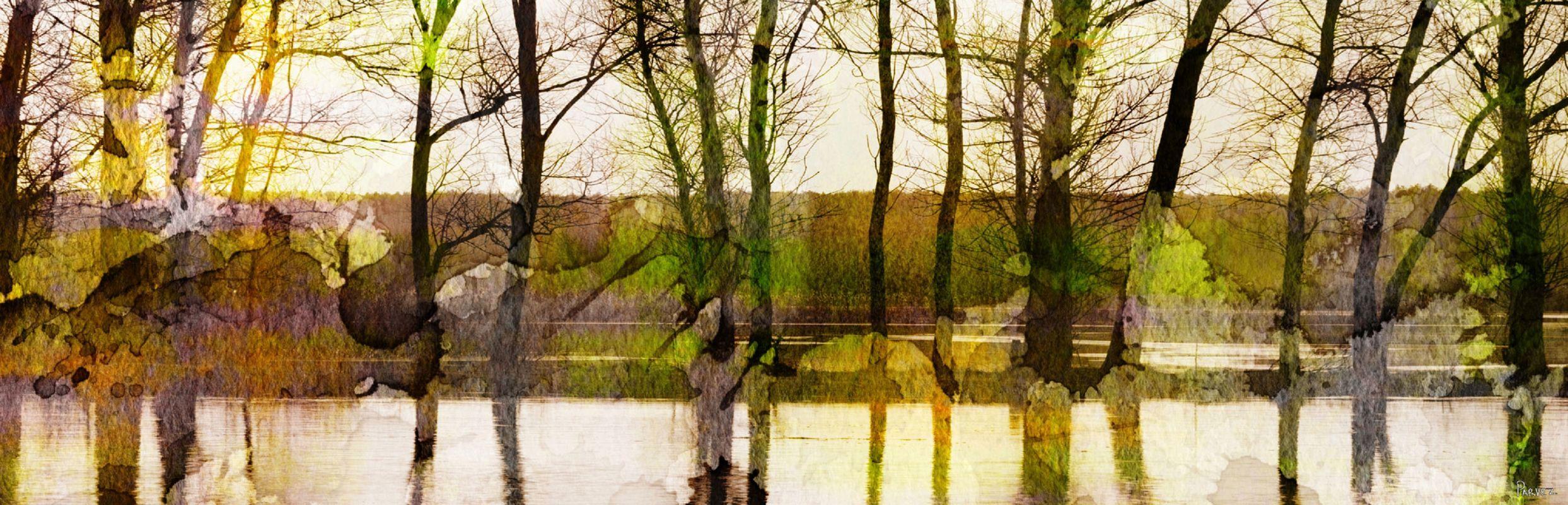 Parvez Taj Lake Trees Art Print on Premium Canvas 20 x 60 Home Decor