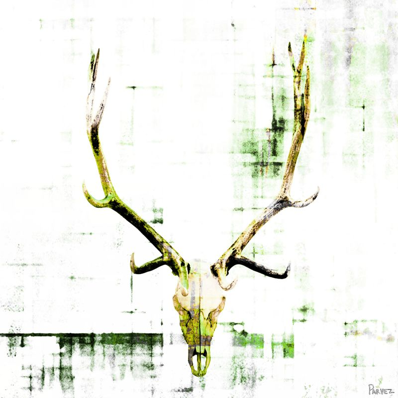 Parvez Taj Antler Art Print on Premium Canvas 32 x 32 Home Decor
