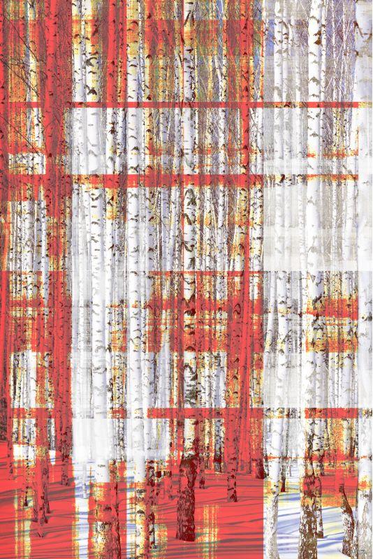 Parvez Taj Aspen Trees Art Print on Premium Canvas 45 x 30 Home Decor
