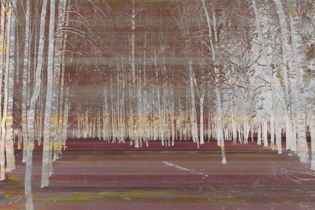 Parvez Taj Night Birch Art Print on Premium Canvas 24 x 36 Home Decor Sale $113.53 ITEM: bci2686279 ID#:G37-108-C-36 UPC: 700064367667 :