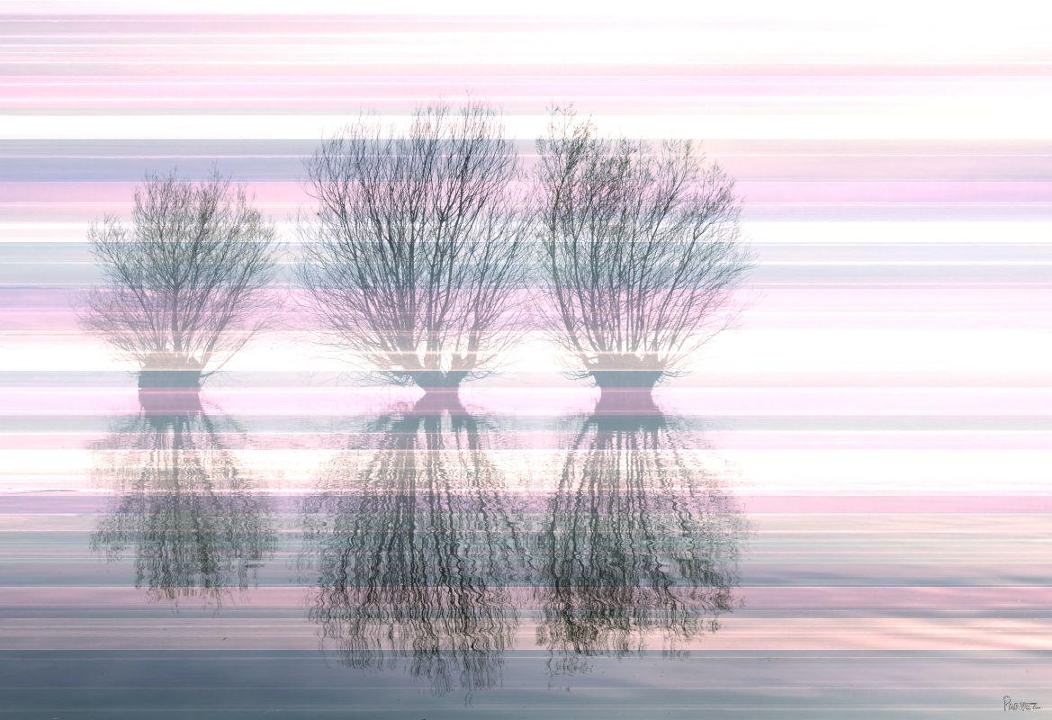 Parvez Taj 3 Trees Art Print on Premium Canvas 16 x 24 Home Decor Sale $70.78 ITEM: bci2685416 ID#:G37-109-C-24 UPC: 700064367674 :