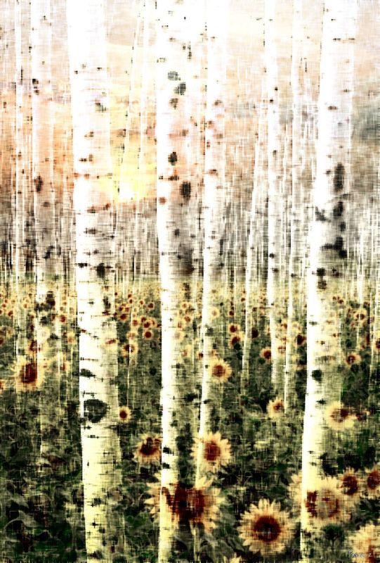 Parvez Taj Daisy Forest Art Print on Premium Canvas 18 x 12 Home Decor Sale $66.03 ITEM: bci2685761 ID#:G41-58-C-18 UPC: 700254855226 :