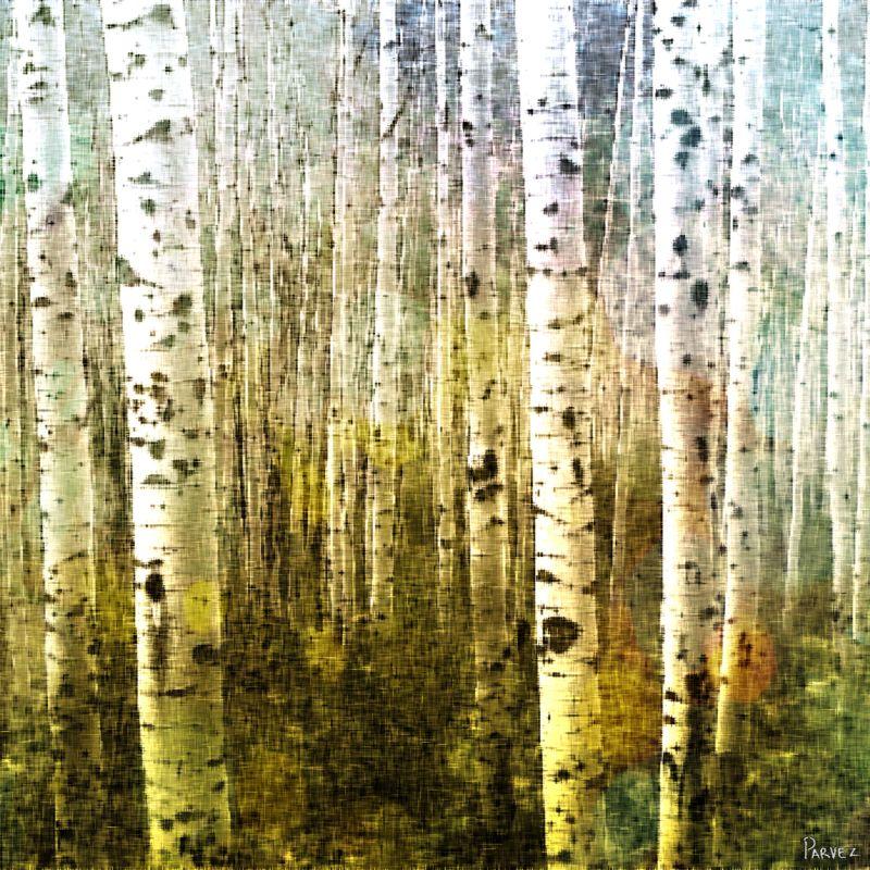 Parvez Taj Aspen Ski Art Print on Premium Canvas 32 x 32 Home Decor Sale $151.05 ITEM: bci2685522 ID#:G41-62-C-32 UPC: 700254855288 :
