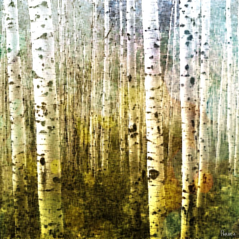 Parvez Taj Aspen Ski Art Print on Premium Canvas 40 x 40 Home Decor Sale $189.53 ITEM: bci2685523 ID#:G41-62-C-40 UPC: 700254855295 :