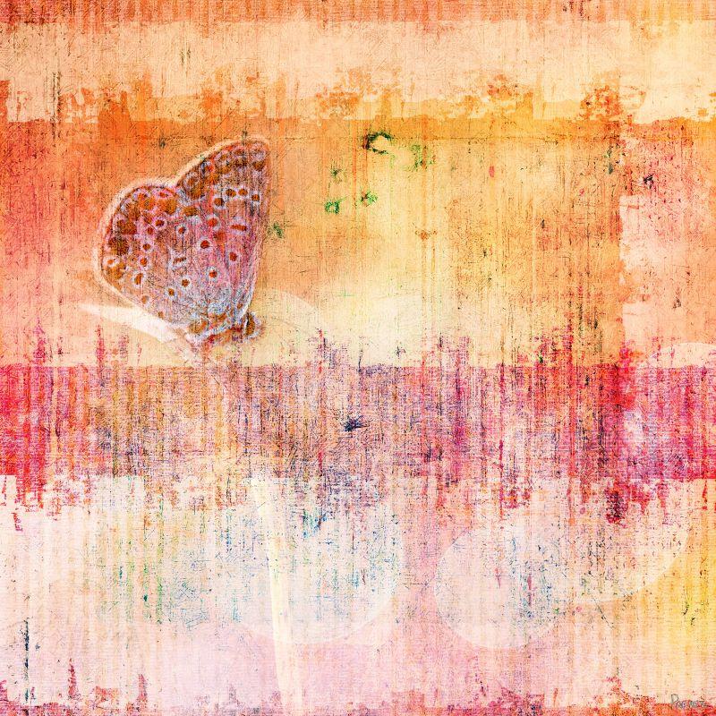 Parvez Taj Butterfly Art Pring on Premium Canvas 18 x 18 Home Decor Sale $84.55 ITEM: bci2685661 ID#:G47-08-C-18 UPC: 799559131074 :