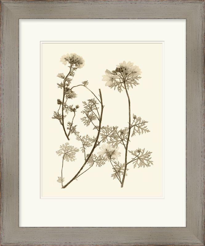 "Surya LJ4006 24"" x 29"" Sepia Nature Study IV Giclee Print White Home"