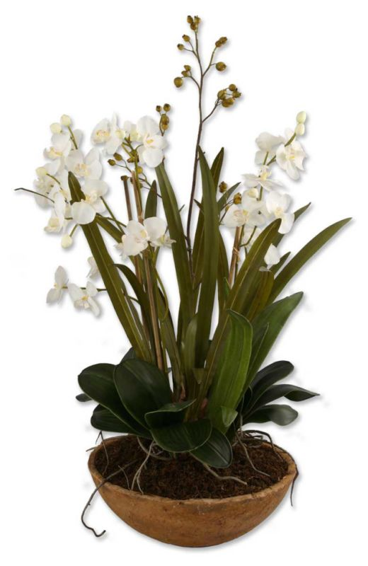 Uttermost 60039 Hand Painted Dish Planter from the Moth Orchid Planter