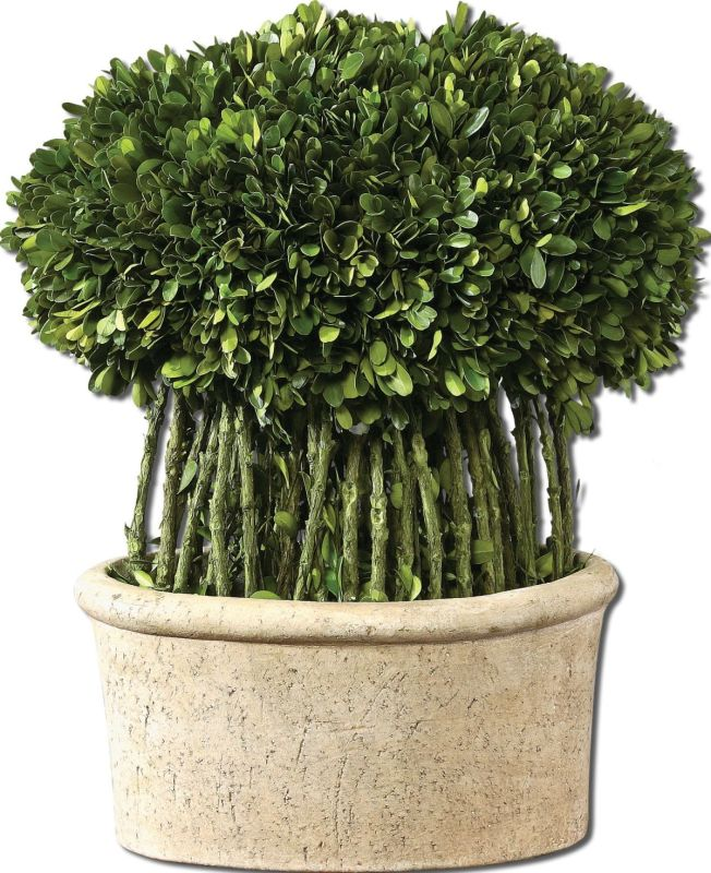 Uttermost 60108 Preserved Boxwood Willow Topiary Accessory Evergreen